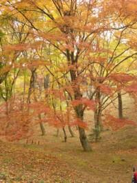 虹の郷 紅葉の木