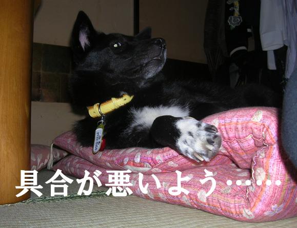 2011-11-06 みる