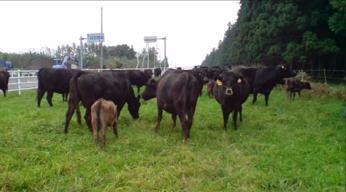 青森県弘前市で起業する社長のブログ_弘前市境『牛』