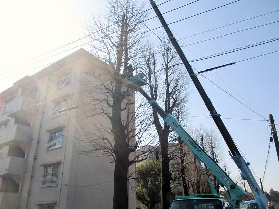 街路樹剪定