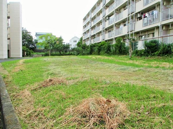 16棟は上飯田団地連合自治会の緑化委員会の皆様にお願いいたしました…。
