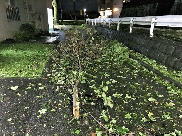 2019年10月12日(土)台風19号の後の片づけ