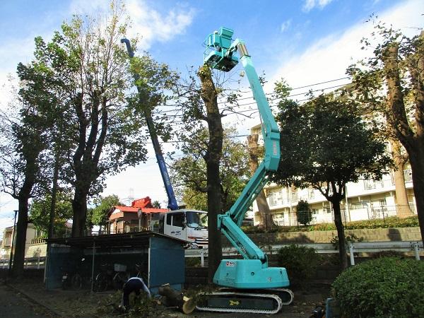 2019年11月6日(水)街路樹の枝打ちが始まりました。