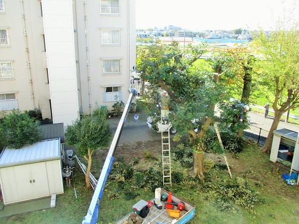 2019年11月14日(木)枝打ち