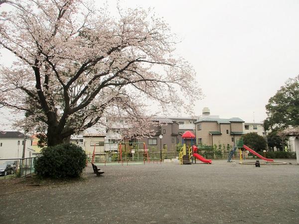 2020年3月30日(月)児童公園のさくらもほぼ満開!