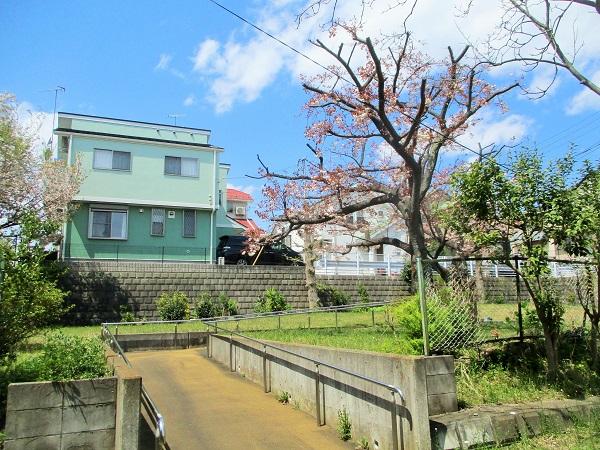 2020年4月10日(金)17棟の八重桜
