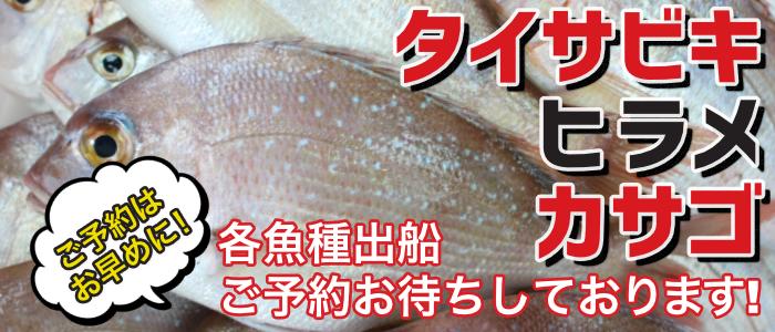 鯛サビキ、カサゴ、ヒラメ出船ご予約受付中!!