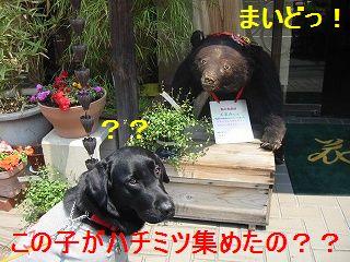 おばさんは、熊さんでちゅかっ!?
