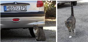Wegelebenのネコ
