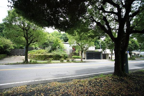 楠の街路樹