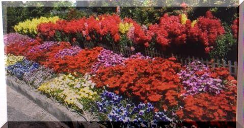 色とりどり花壇