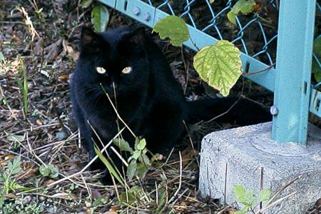 散歩で出会った黒猫