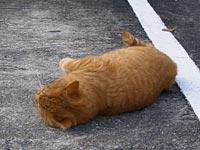 寝転ぶネコ