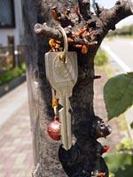 街路樹にかかったカギ