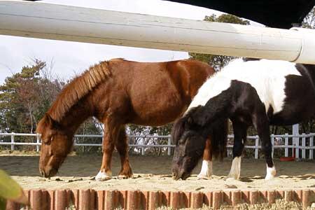 裏庭にいた馬