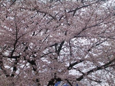 桜−服部内科