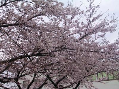 桜−金山駅