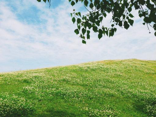 しろつめぐさの丘