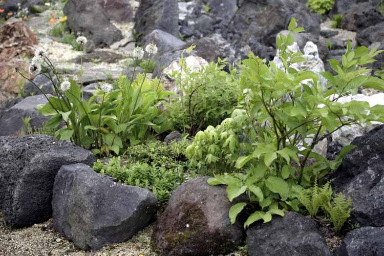 山菜ガーデン