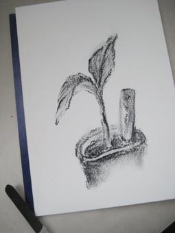 ダージリンバナナ