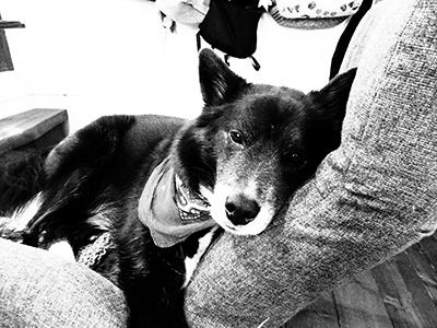 愛犬チャパティー