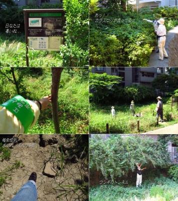 H23.7.16 福富川PES