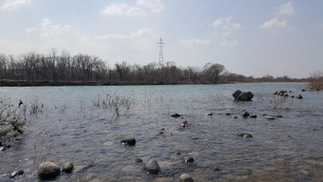 3月15日川写真ー3.jpg
