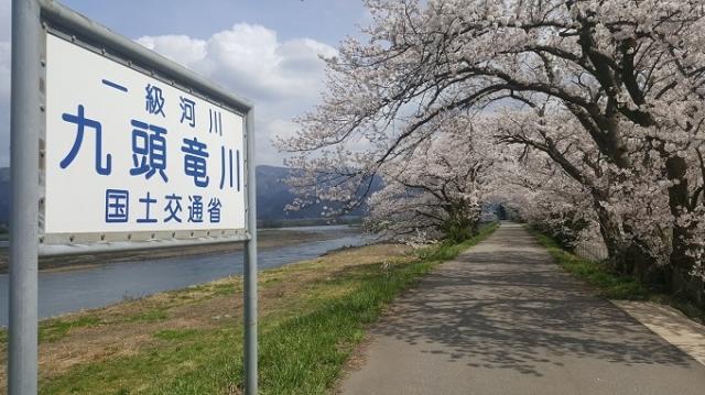4月3日五松桜.jpg