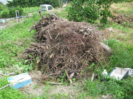 枯れ木堆肥.JPG