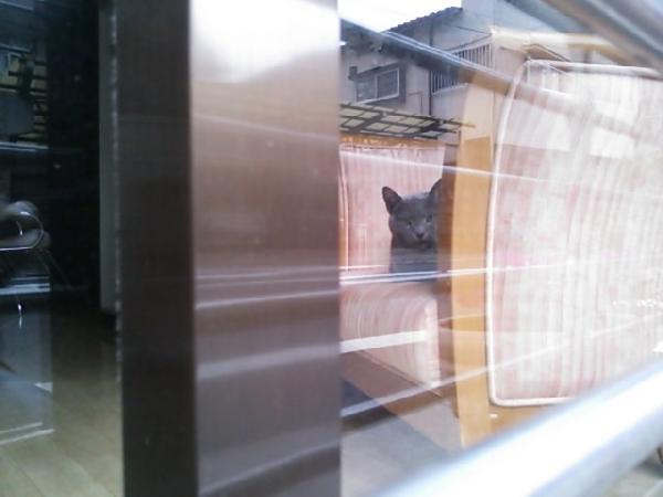荻窪 猫のいる美容室.JPG