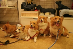dogfree4