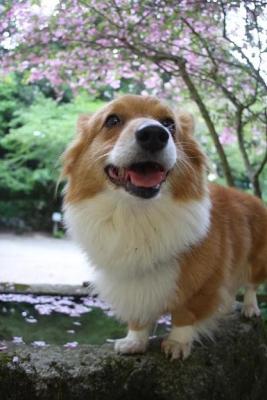 桜と my dog