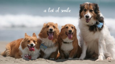 a lot of smile
