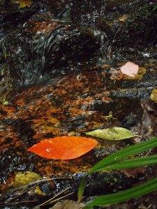 源流も秋の色。