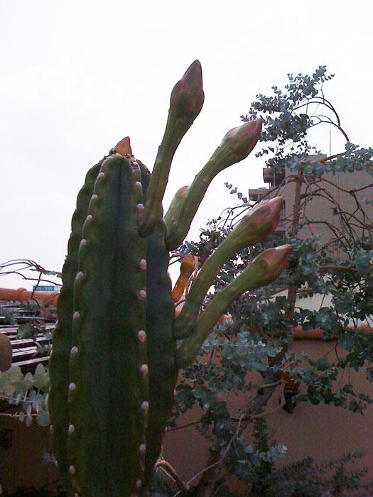 082010_Cactus