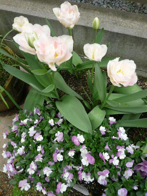 12春の花1