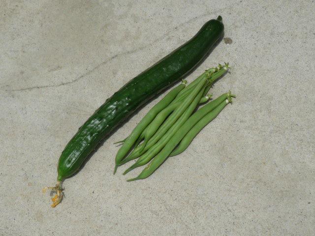 収穫0613