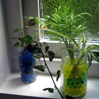 コーヒーココア.net ジェルボール 観葉植物