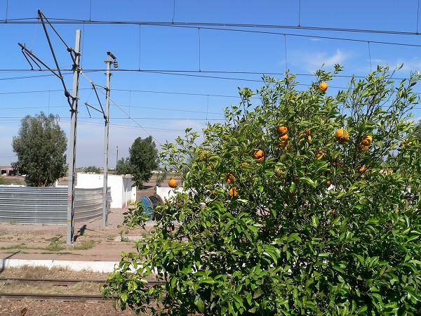 駅のオレンジ
