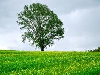 哲学の木と菜の花