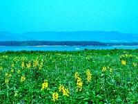 シブノツナイ原生花園