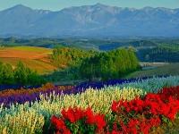 展望花畑 四季彩の丘