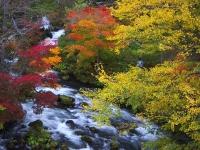 滝見橋の紅葉