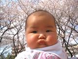桜とぷくぷく