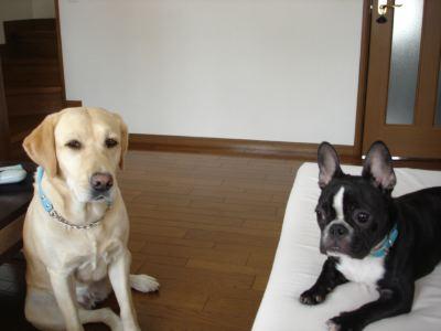 billy&nino