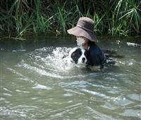アッシュ強制遊泳