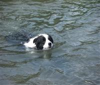 アッシュ泳ぐ