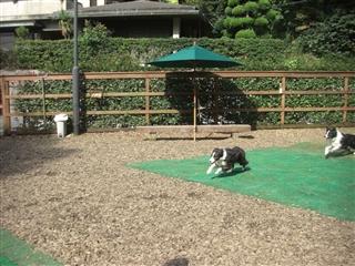 ジェラちゃん&緑くん走る