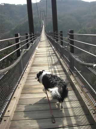 吊橋渡るアッシュ