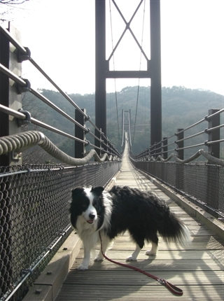 吊橋渡るアッシュ2